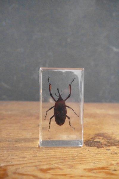 画像1: アンティーク 虫 標本オブジェ B