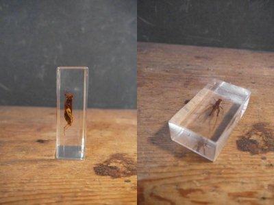 画像3: アンティーク 虫 標本オブジェ E