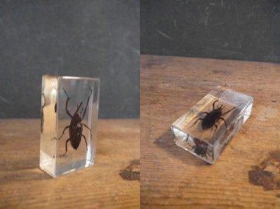 画像3: アンティーク 虫 標本オブジェ B