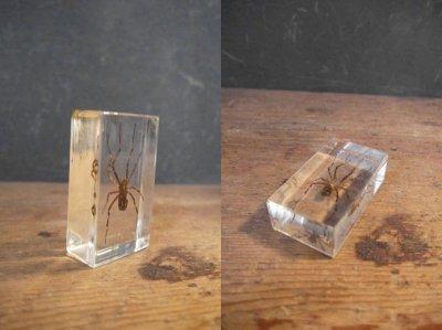 画像3: アンティーク 虫 標本オブジェ A