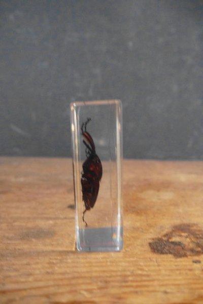 画像2: アンティーク 虫 標本オブジェ B