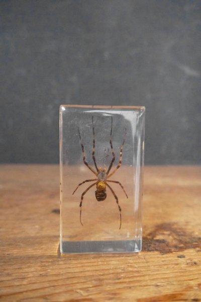 画像1: アンティーク 虫 標本オブジェ A